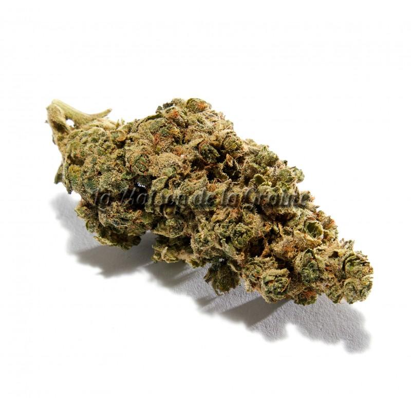 Fleurs de CBD - Amnésia Haze (14%)