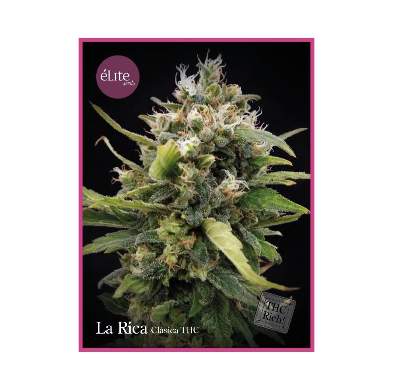 La Rica THC - Elite Seeds