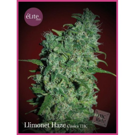 Limonet Haze THC - Elite Seeds