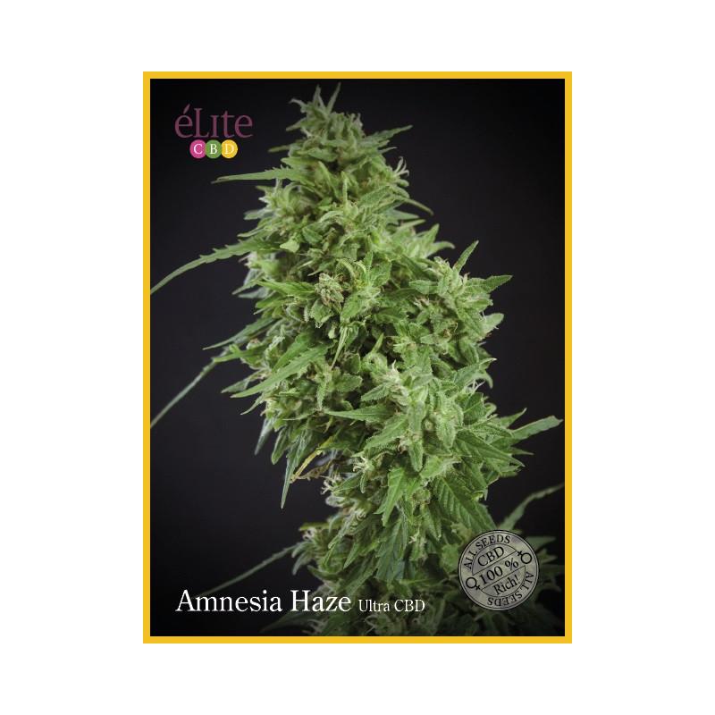 Vente de Graines de La Rica THC - Elite Seeds
