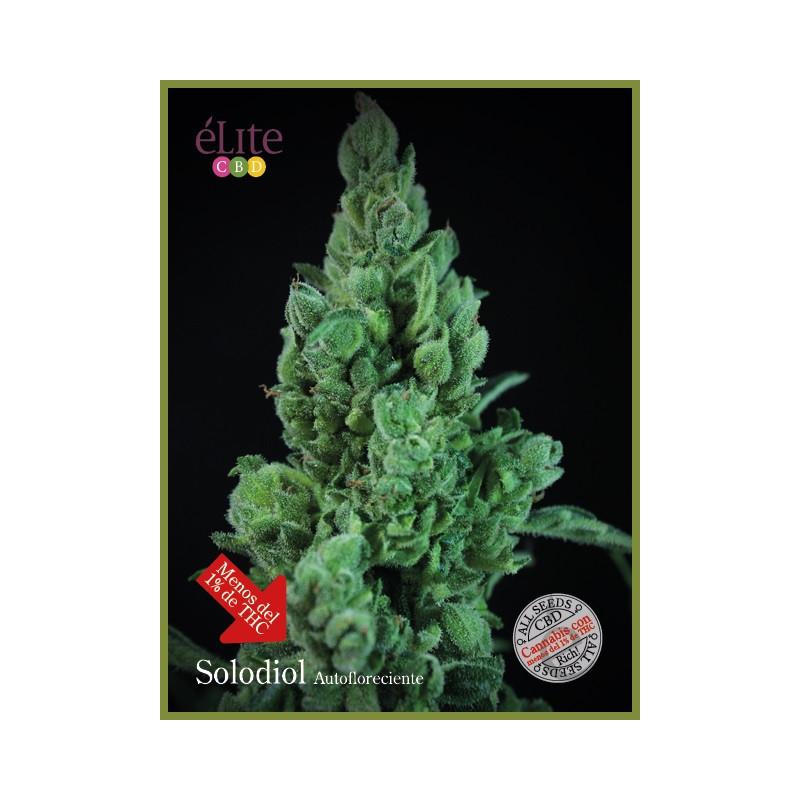 Vente de Graines Llimonet Haze CBD Auto- Elite Seeds
