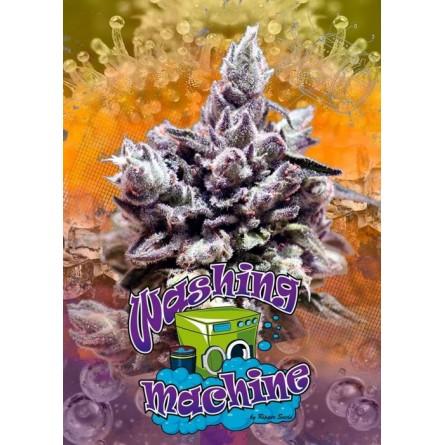 Washing Machine - Ripper Seeds