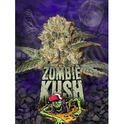 Zombie Kush - Ripper Seeds