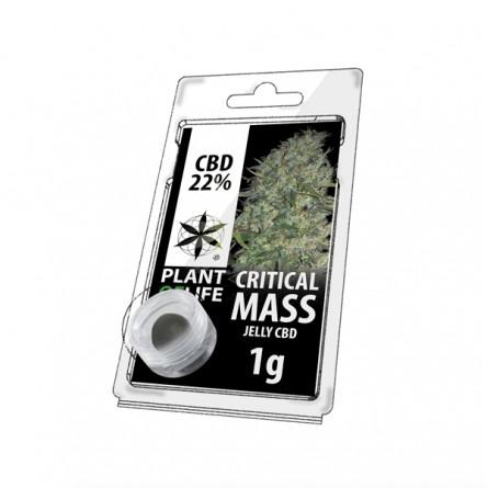 Résine CBD 22% - Critical Mass