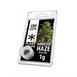 Résine CBD 22% - Amnesia Haze