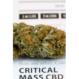 Critical Mass CBD - Dinafem