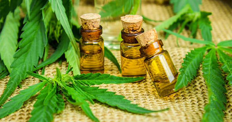 plant-cannabis-huile